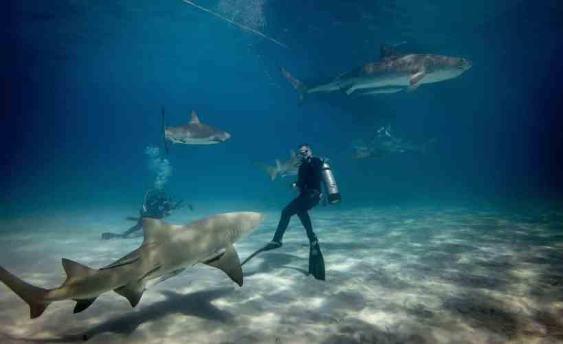 shark dive oahu