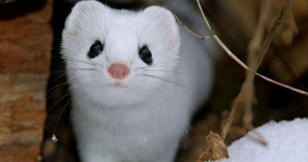 這小傢伙是不是世界上最萌的生物啊烏溜溜的大眼,好像隨時掛著笑容,可愛極了