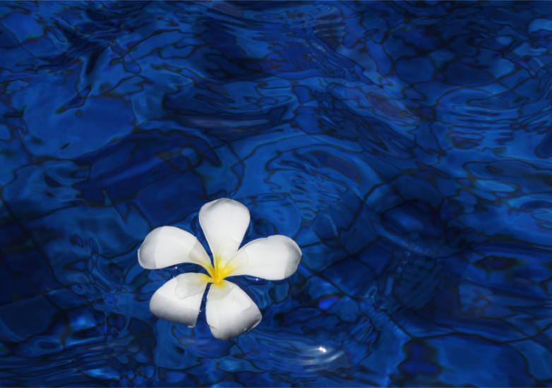 Rabi Krisztina: A lélek virágai avagy a Bach-virágterápia