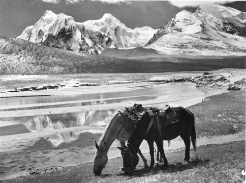 Tibetexpedition,  Pferde am Gordama-See