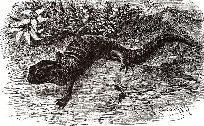 Крокодилы Минск