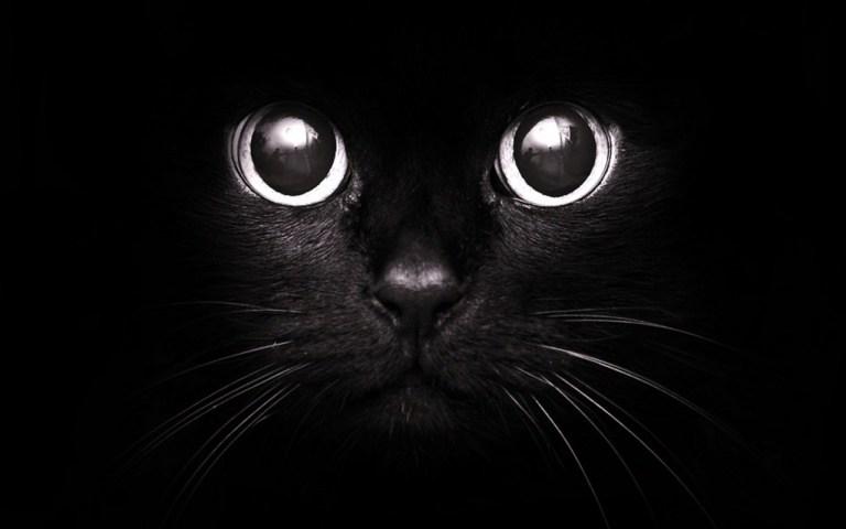 Любовь кошек людям