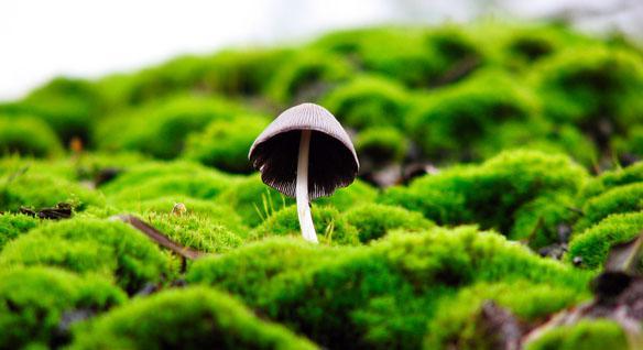 Тайны грибов. О чём думают грибы?