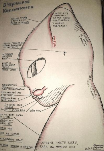 Алешенька разрез