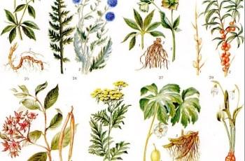 лечебные травы. обзор