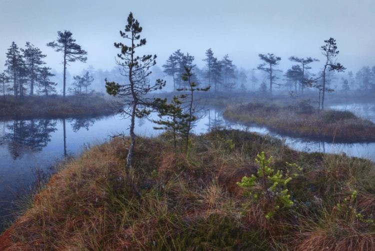 Сибирские Болота причина глобального потепления