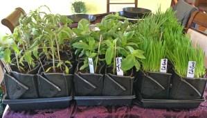 Plants 4Sale 1