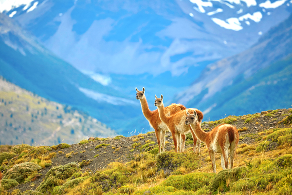 patagonia-chile-shutterstock_232212274