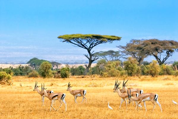 amboseli-kenya-shutterstock_65120086