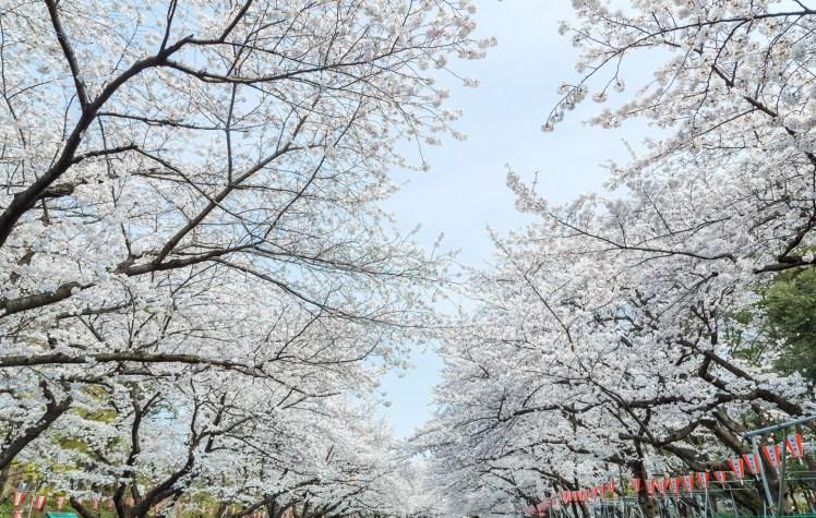 東京上野恩賜公園.jpg