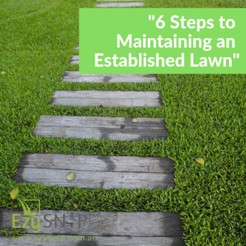EzySNIP presents 6 Steps to Maintaining an Established Lawn