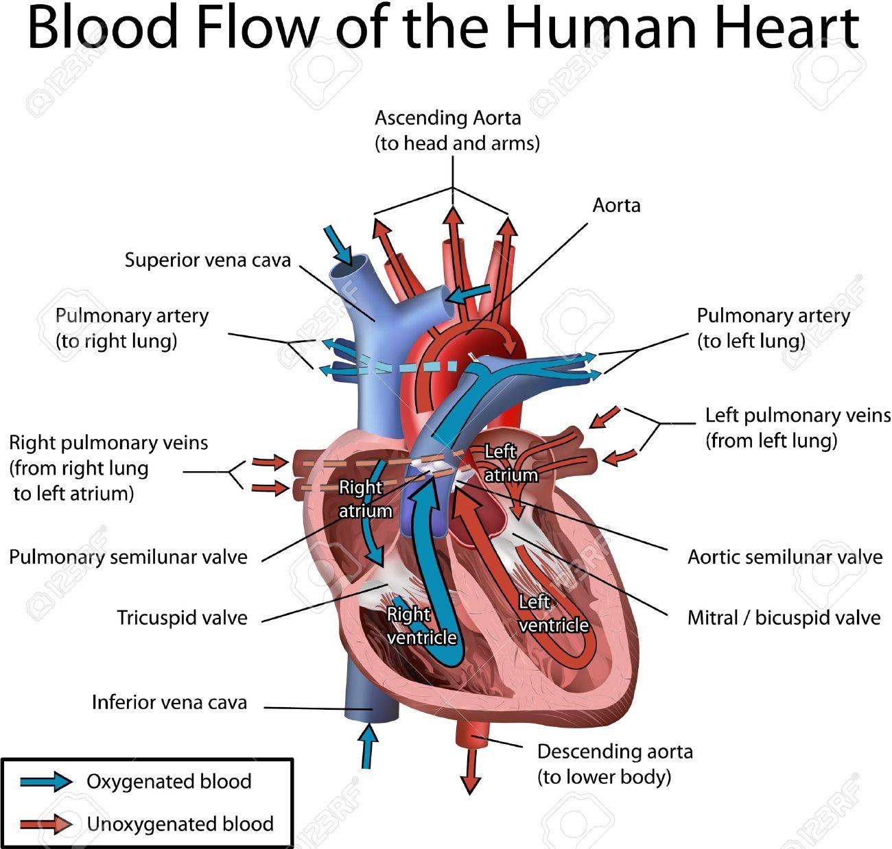 Screening For Critical Congenital Heart Defect