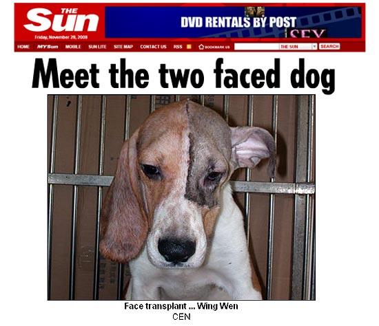 Cão com face transplantada