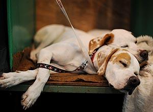 Pesquisadores da Hungria dizem que compreensão de cão é equivalente a bebês de seis meses a um ano de idade