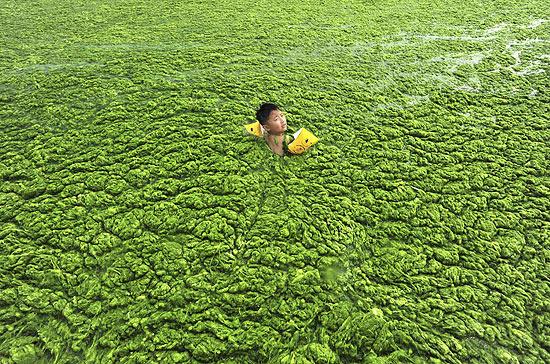 Menino nada com boias em meio à camada de alga que cobriu o mar da mais popular praia de Qingdao