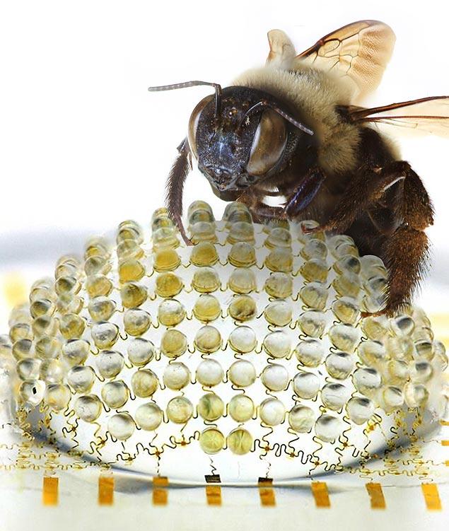 Imagem de divulgação da câmera criada por John A. Rodges, da Universidade de Illinois: visão 180 graus como a de uma mosca