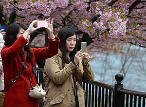 Cerejeiras em Shizuoka, no Japão