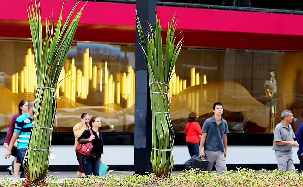 Nos canteiros centrais da avenida Paulista, saem azaleias que secaram e entram plantas ornamentais originárias da ilha de Madagascar, na África Leia mais