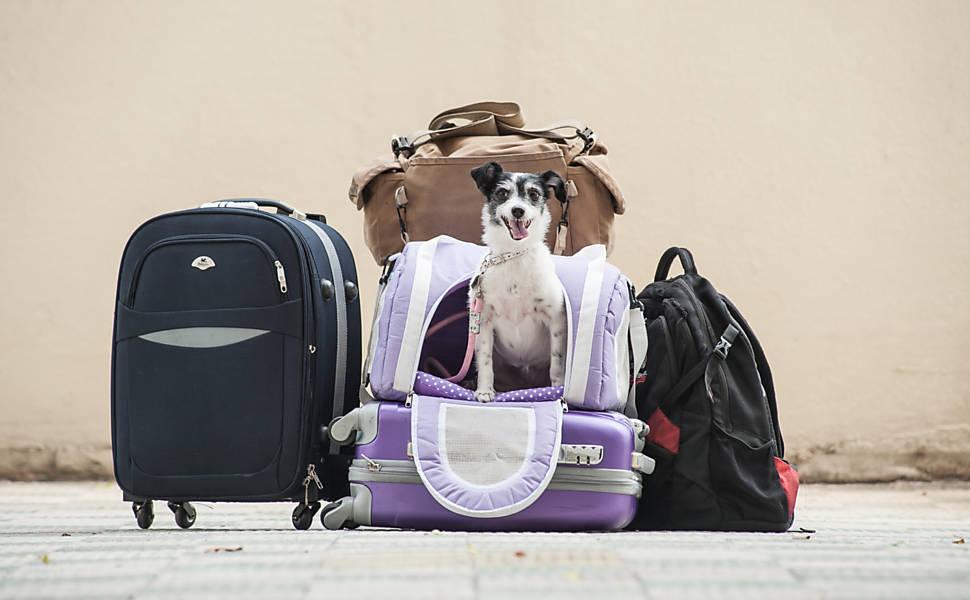 Viagem animal