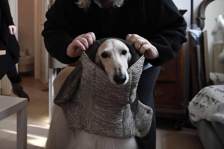 A designer Giovanna Temellini ajusta uma de suas peças da linha de roupas para cachorros