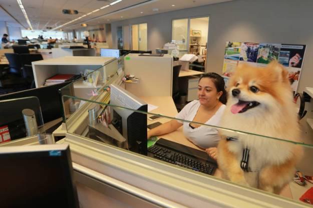 Dafini Oliveira e Foz, seu spitz alemão, que faz pose no escritório da MSD Saúde Animal, no Paraíso