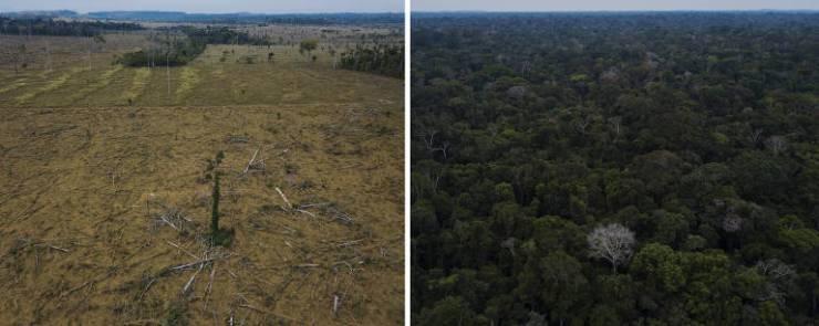Montagem mostra área desmatada na APA do Rio Pardo e região da Floresta Nacional Bom Futuro em Rondônia
