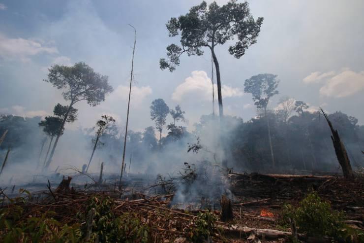 A foto mostra várias árvores queimadas e envoltas de fumaça, com vários matos também queimados no chão.