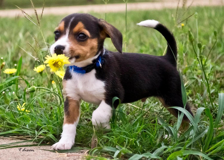 Jippie we krijgen een pup 8 Tips voor een goede
