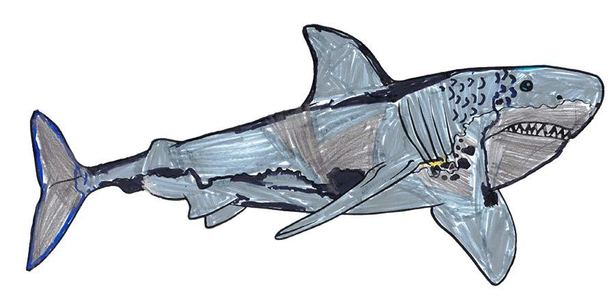 Weißer Hai Malvorlage