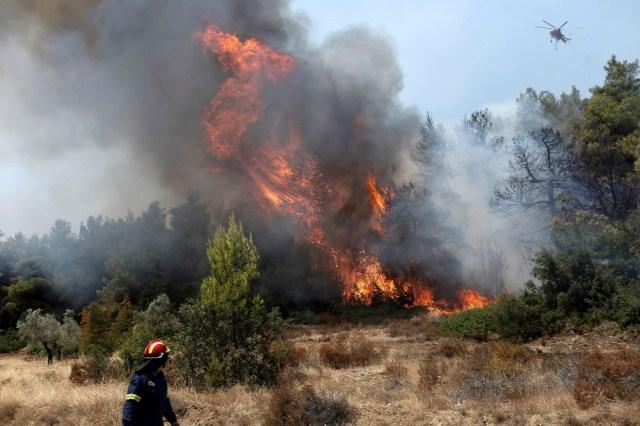 Las autoridades han declarado el estado de alerta para Eubea y la región deGreciaCentral y ha solicitado asistencia a través del Mecanismo Europeo de Protección Civil.