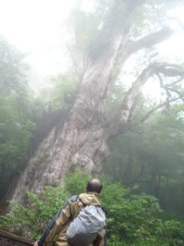 縄文杉に挨拶する私