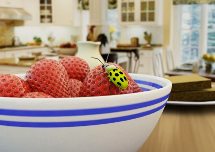 Eyleen Angelina Koch: 3D bug and strawberries