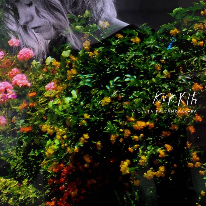 Violeta Päivänkakkara – kukkia