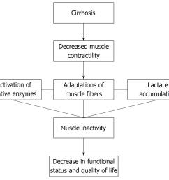 figure 1 flow chart demonstrating the consequences of cirrhosis regarding muscular adaptation and functional repercussions 134  [ 1442 x 1221 Pixel ]