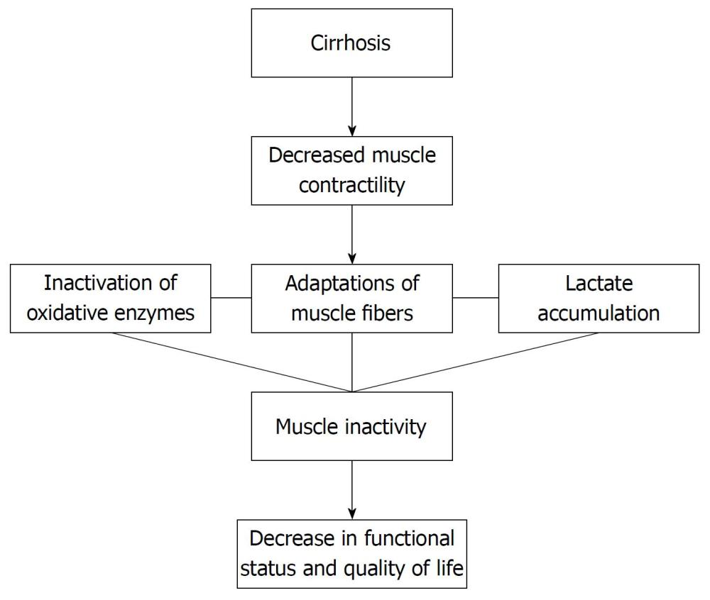 medium resolution of figure 1 flow chart demonstrating the consequences of cirrhosis regarding muscular adaptation and functional repercussions 134