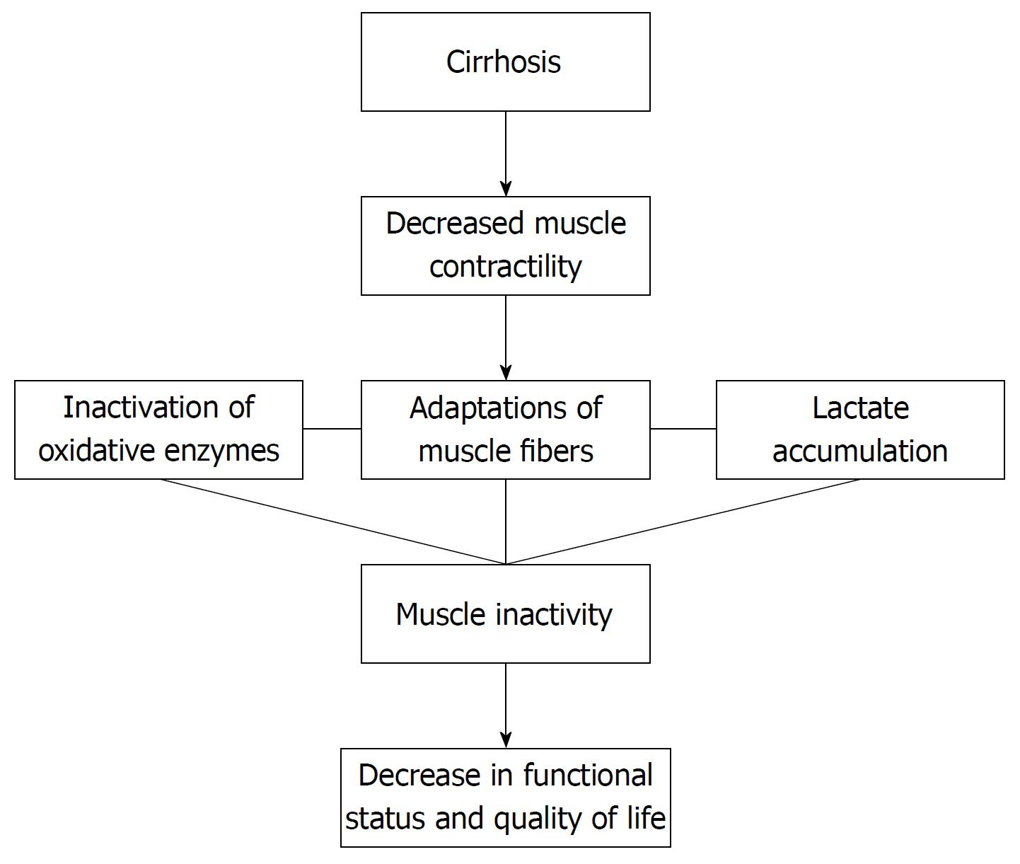 hight resolution of figure 1 flow chart demonstrating the consequences of cirrhosis regarding muscular adaptation and functional repercussions 134