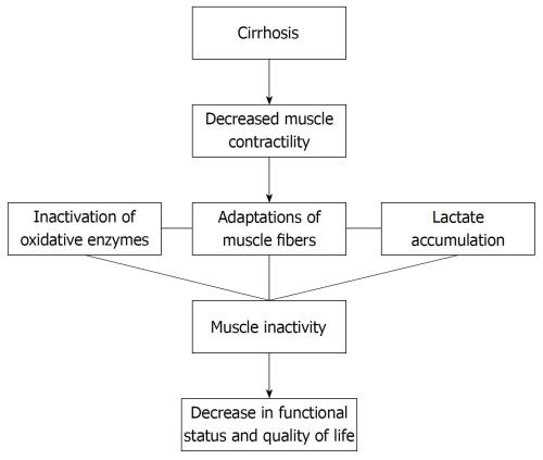 small resolution of figure 1 flow chart demonstrating the consequences of cirrhosis regarding muscular adaptation and functional repercussions 134