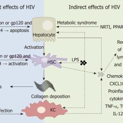 Liver Panel Diagram 1999 Mitsubishi Mirage Radio Wiring Human Immunodeficiency Virus Infection And The Mechanisms By Which Hiv Of Cells Can Contribute To Disease Progression Either Direct Left Or