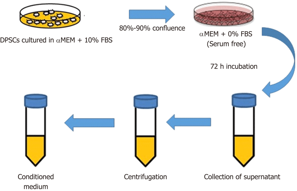 medium resolution of figure 1 schematic diagram representing the steps of obtaining cell free conditioned medium from dental pulp stem cells the dental pulp stem cells dpscs