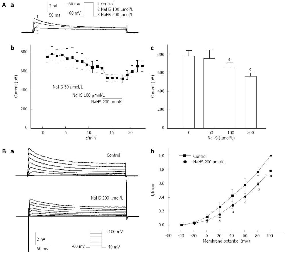medium resolution of figure 5 effects of nahs on ikv in gastric fundus smooth muscle cells aa representative traces elicited by a single depolarized step pulse