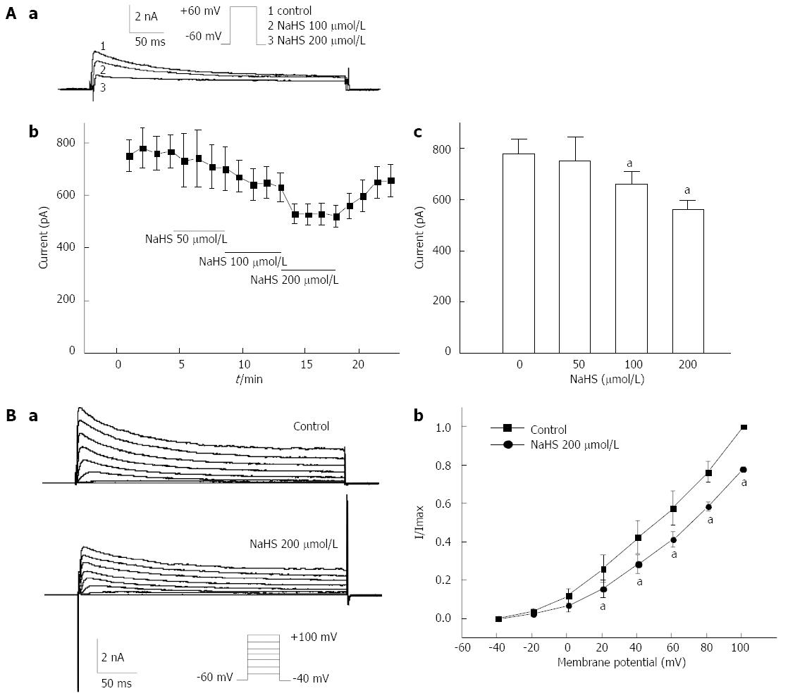 hight resolution of figure 5 effects of nahs on ikv in gastric fundus smooth muscle cells aa representative traces elicited by a single depolarized step pulse