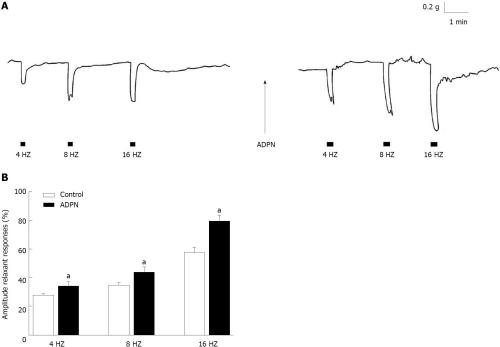 small resolution of figure 2 effects of adiponectin on the neurally induced relaxant responses in strips from the mouse gastric fundus a typical tracing showing the relaxant