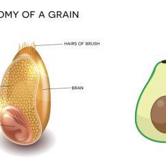 Grain Kernel Diagram Plant To Label Whole