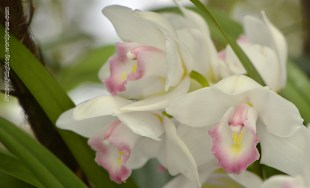 Orchidée (4) - Grandes Serres du Jardin des Plantes (75) - février 2013