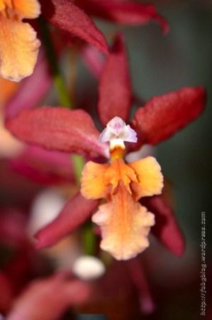 Orchidée (14) - Grandes Serres du Jardin des Plantes (75) - février 2013