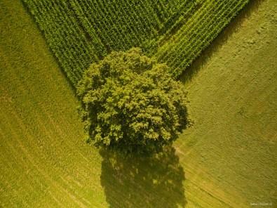 Baum von oben