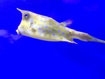 day-5-fish