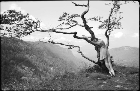 Dancer-in-the-Tree