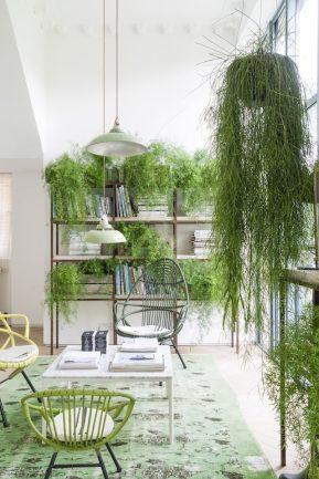 Lugar de plantas é dentro de casa 3
