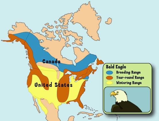 We restored the Bald Eagle to its homeland We can do the same for